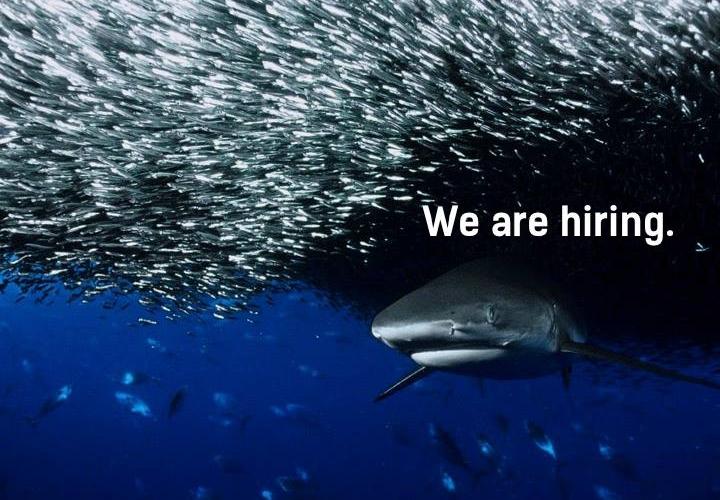 Hledáme žraloky do týmu